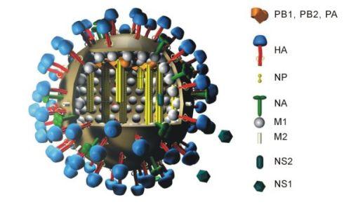 Virus A(H1N1)