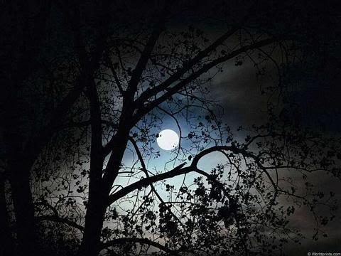 Beramal di Malam Lailatul Qadar